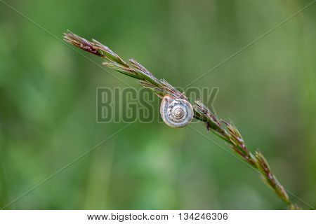 Antenna Snail Close Up Portrait On A Spike