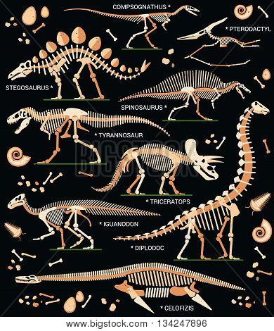 Collection of Dinosaur Skeletons and Bones. Vector Illustration