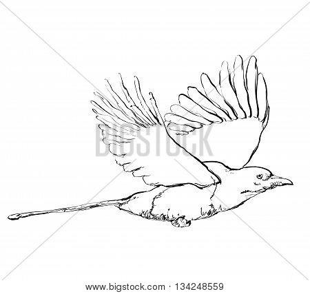 Hand drawn crow in flight. Birds doodles sketch.