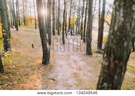 Happy romantic newly married couple holding each other in sunny autumn pine forest.