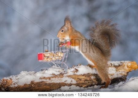 red squirrels with shopping cart and peanuts