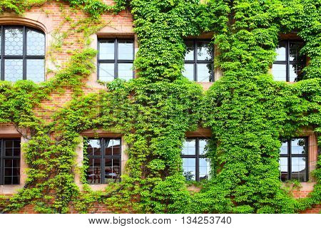 Old house overgrown with green ivy, Germany