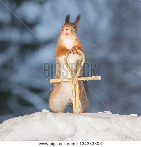close up of red squirrel in snow with ankh