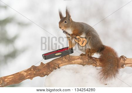 red squirrel in snow with guitar in sun light