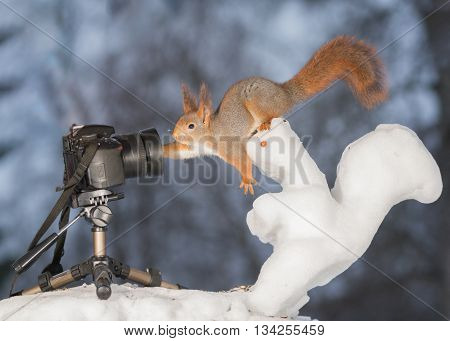 red squirrel with snow squirrel and camera