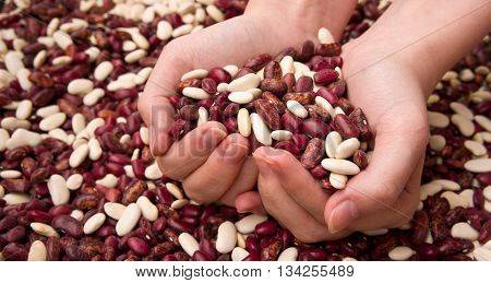 hands are put in the form of heart, in palms the heap of haricot, female hands, young