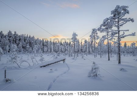 tracks in a forest snow landscape  in sun light