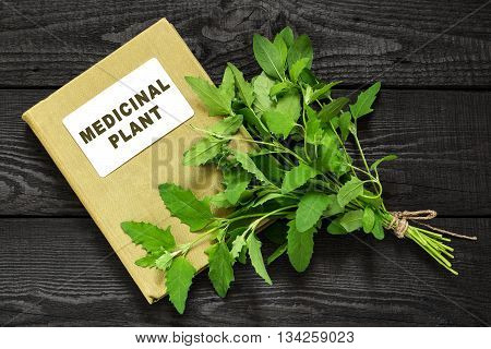 Medicinal plant Atriplex (saltbush orache) and herbalist handbook. Used in herbal medicine cooking food for animals to prevent soil erosion