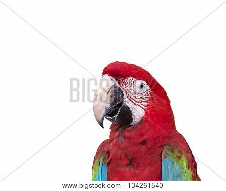 Close Up Colorful Parrot Macaw Isolated On White