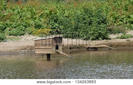 A Wooden Duck House with a Ramp in a Pond.
