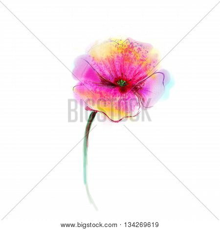 Watercolor painting poppy flower. Isolated flower on white background. Pink and red poppy flower painting. Hand painted watercolor floral flower background.