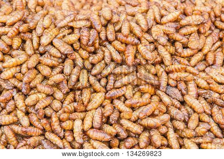 fried insects fried silkworm as snack in Asian countries.