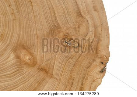 Cross Section Of Elm Tree Trunk Showing Growth Rings.