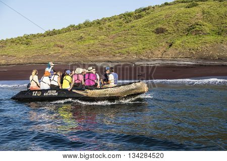 GALAPAGOS ISLANDS - 7 FEBRUARY 2016 - Passengers of Silver Galapagos a luxuurious Silversea expedition cruise ship enjoy an excursion on an inflatable boat watching for wildlife and spot a sea lion lying on the beach.