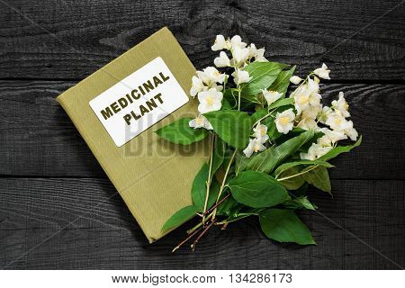 Medicinal plant Philadelphus (Jasmine Mock orange) and herbalist handbook. Used in herbal medicine cooking cosmetics and perfumery gardening