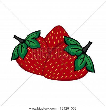 Hand painted strawberry berries close up. Three berries of strawberry vector