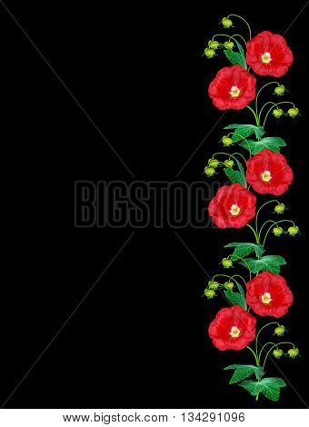 colorful bright flowers mallow isolated on black background