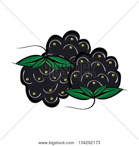 Hand drawn berries closeup. Three blackberries vector. Hand painted.