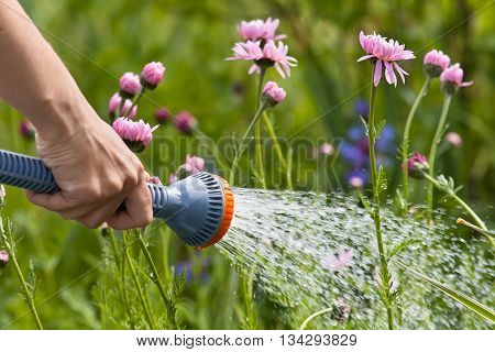 hand watering flowers in the garden closeup