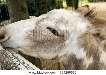 Close up of snout donkey in a farm