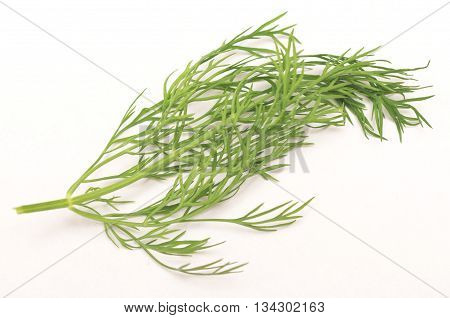 fresh dill isolated on a white background