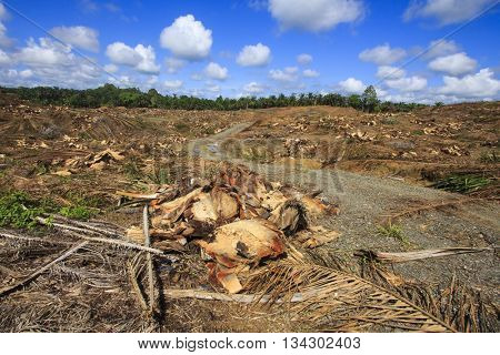 Deforestation environmental destruction clearing of rainforest for palm oil production