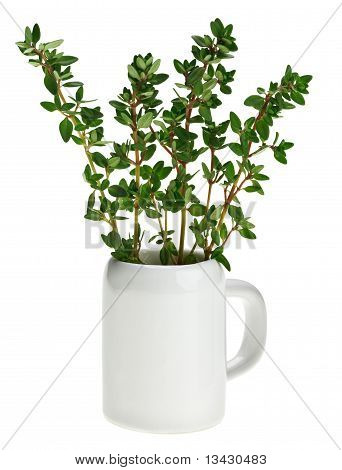 Fresh Green Thyme Bunch In Small Ceramic Noggin