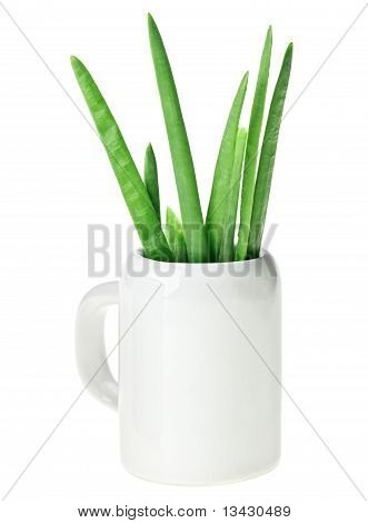 Fresh Green Spring Onion Bunch In Small Ceramic Noggin