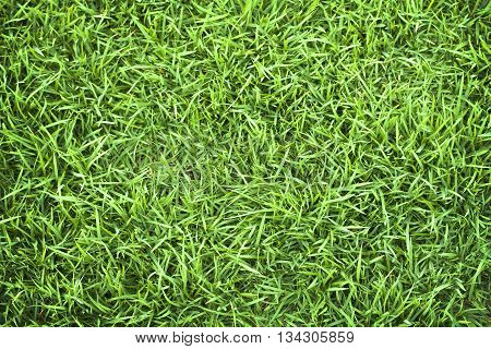 Green grass grass texture grass field grass background