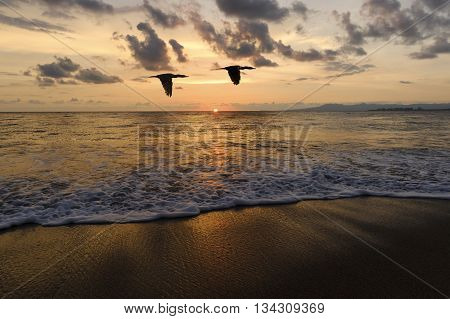 Ocean sunset birdsis two birds flying silhouetted against a sunset sky while a gentle wave rolls to shore amongst the scattered light. .