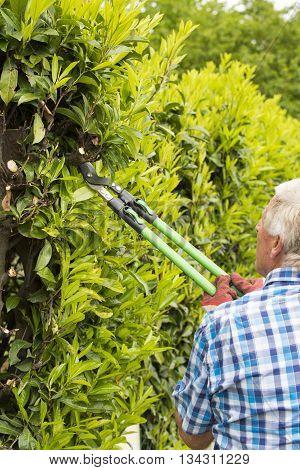 senior man cutting hedge in garden France