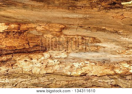 Detail of very old wood damaged by woodworm