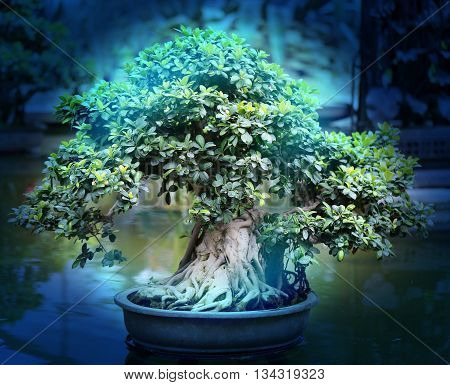 Macro photo of beautiful bonsai on the water