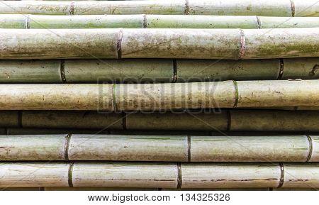 horizontalclose up texture background of bamboo trunk