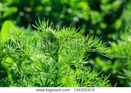 New green bush background