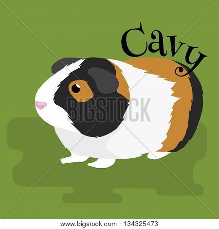 Happy Pets, home animals guinea pig on the green background vector illustration