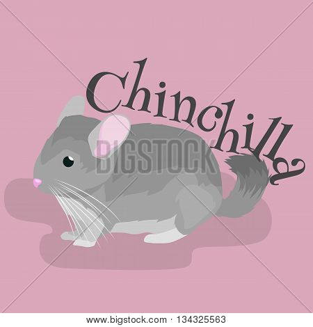 Pets, Gray chinchilla, domestic animals vector illustration on a pink background