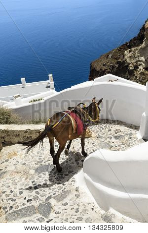 donkey on stairs of Santorini traditional Greek life series