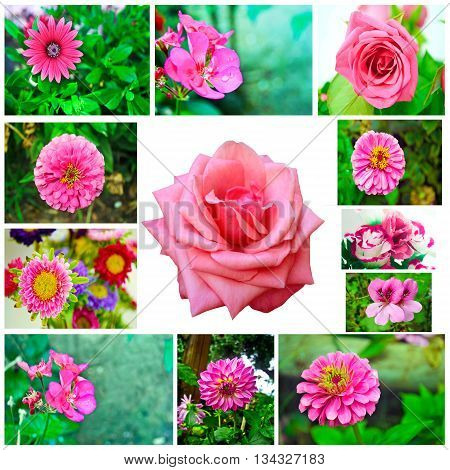 collage of pink and red blooming roses - rose flower photo collage