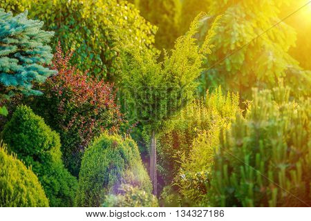 Summer Sunshine in the Garden. Sunny Rockery Garden with Many Different Plant Species.