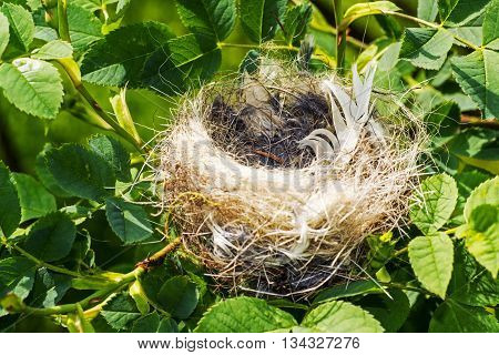 Small Birds Nest with White Feather Between Green Summer Branches Closeup Photo.