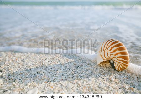 nautilus shell in ocean with waves under the sun light,  shallow dof