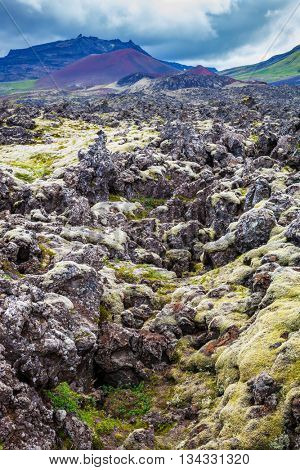 Fields covered with lava, in the central part of the island. Gloomy Iceland in the summer