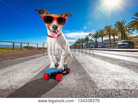 Skater Dog On Skateboard