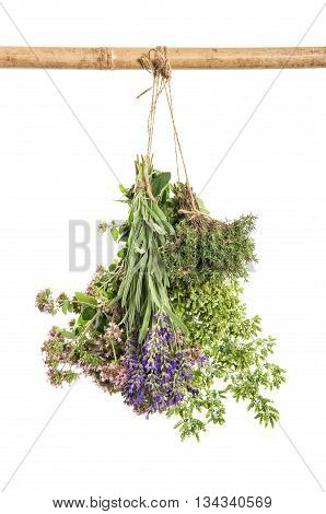 Fresh herbs hanging isolated on white background. Thyme oregano marjoram lavender. Food ingredients