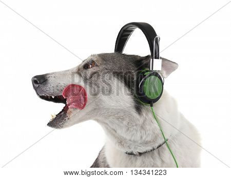 Dog in headphones isolated on white