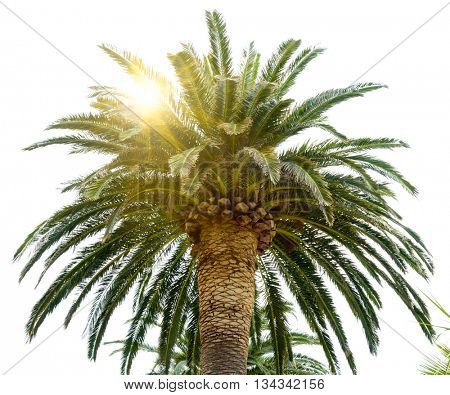 Palm Tree Crown and Sun on the Bright Sky Background