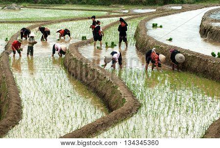 YEN BAI, VIETNAM, March 18, 2016 farmer groups, ethnic Hmong, Yen Bai province highland, rice planting season, terraces