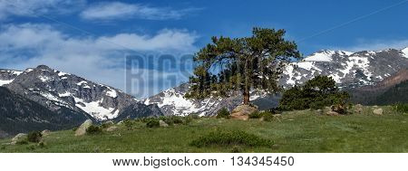 A lone evergreen grows on a hill in inside of Rocky Mountain national Park outsude of Estes Park Colorado