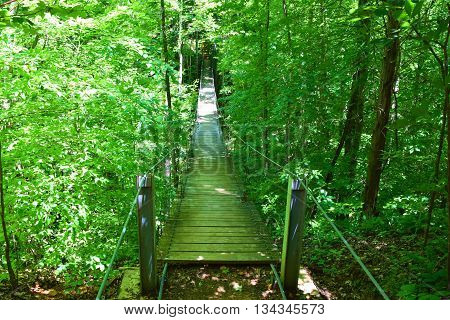 Hiking trail thru a deciduous forest with a suspension bridge taken in Tims Ford State Park, TN